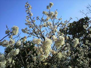 春ですねぇ♪