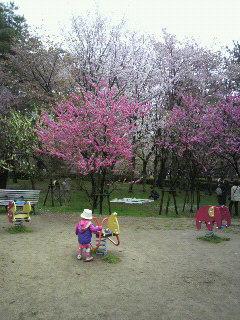 京都御所へ